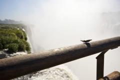 Wodospady Iguaçu