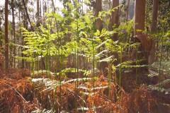 W galicyjskim lesie…
