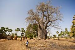 Strażnik Baobabu