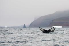 Wiele wielorybów