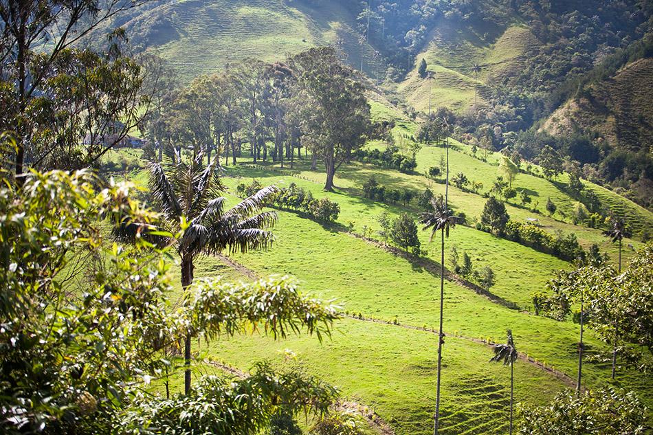 cocora, colombia (10)