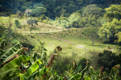 Plantacja kawy, czyli skąd się bierze tinto
