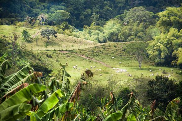 kawa kolumbia recuca (14)