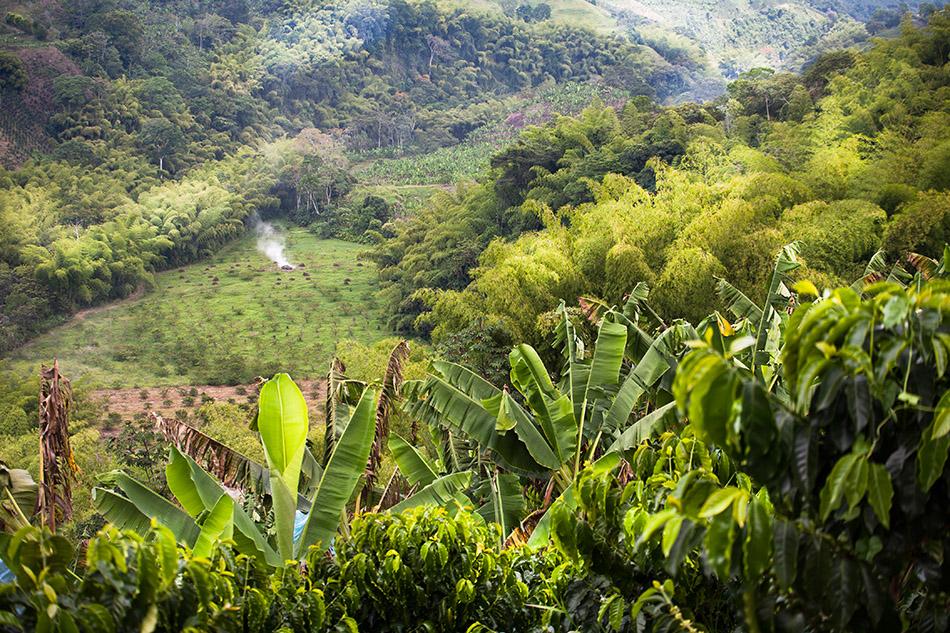 kawa kolumbia recuca (15)
