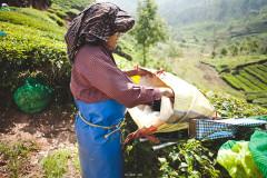 Herbaciane pola Munnaru
