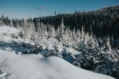Zima znów w Samotni